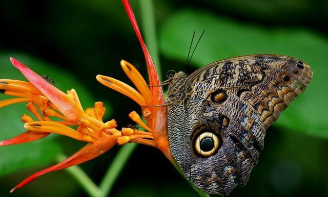 butterfly640