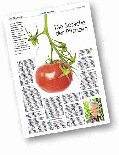 SN-tomate3380x496
